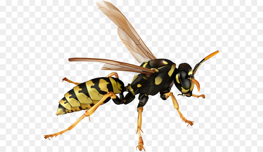 Bee ant clipart