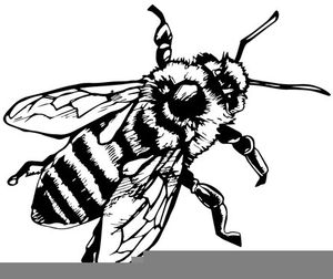 Bee clipart black and white free jpg freeuse download Honey Bee Clipart Black And White | Free Images at Clker.com ... jpg freeuse download