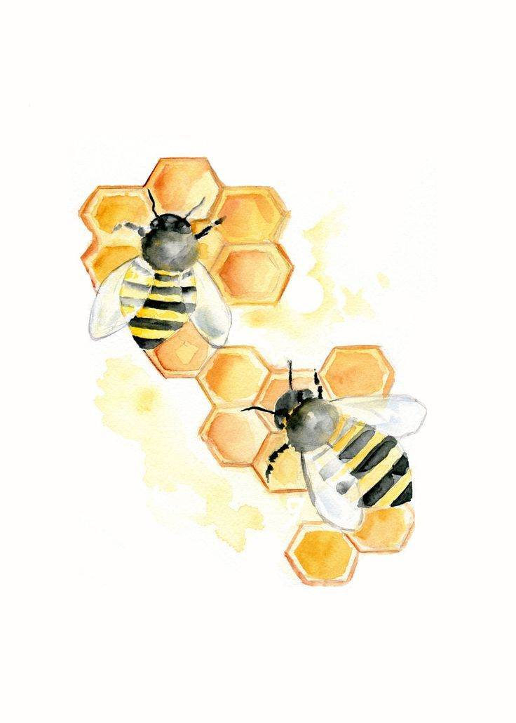 Bee clipart black and white with honeycomb royalty free download Image result for bee hive or honeycombs and bees images clipart free ... royalty free download