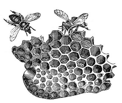 Bee clipart black and white with honeycomb svg library stock 15 Bee Images - Honey and Bumble! - The Graphics Fairy svg library stock
