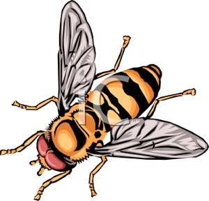 Bee clipart realistic vector free Realistic Bee Clipart | Bee Designs | Honey bee images, Bee clipart ... vector free