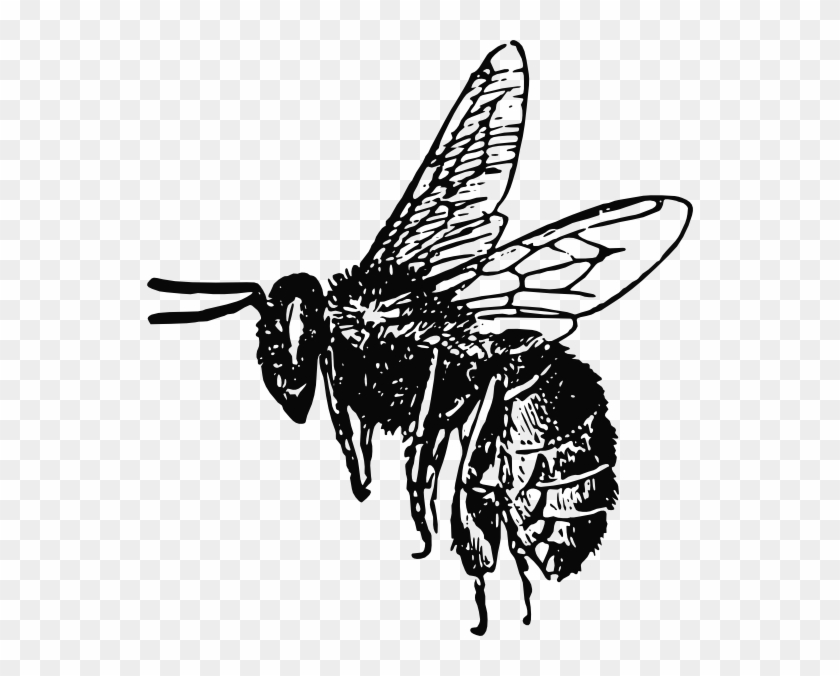 Bee clipart realistic picture free 546 X 596 4 - Realistic Bee Clipart Black And White, HD Png Download ... picture free