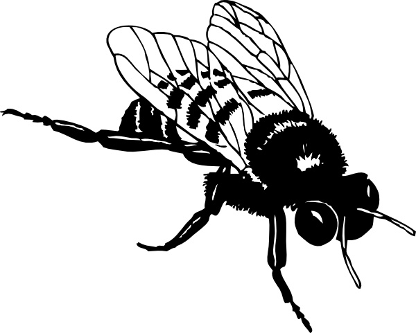 Bee clipart realistic png download Bumble Bee clip art Free vector in Open office drawing svg ( .svg ... png download