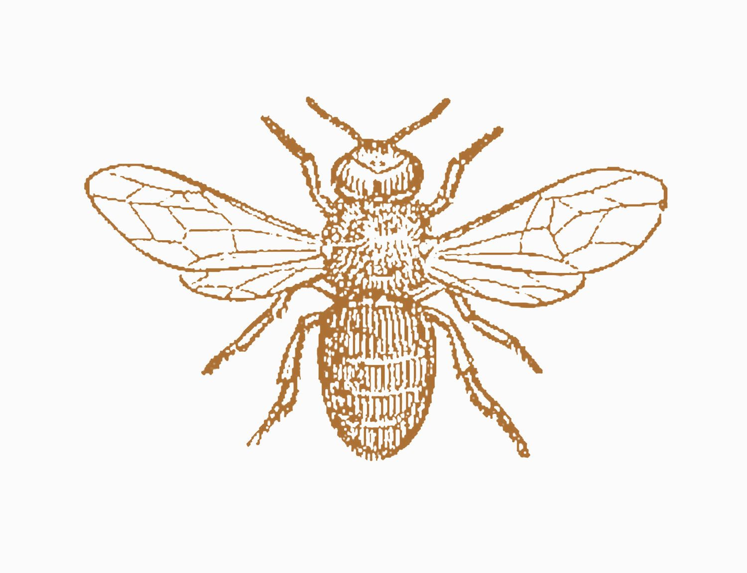 Bee clipart realistic png black and white download Vintage Bee Clip Art | Antique Images: Insect Clip Art: Black and ... png black and white download