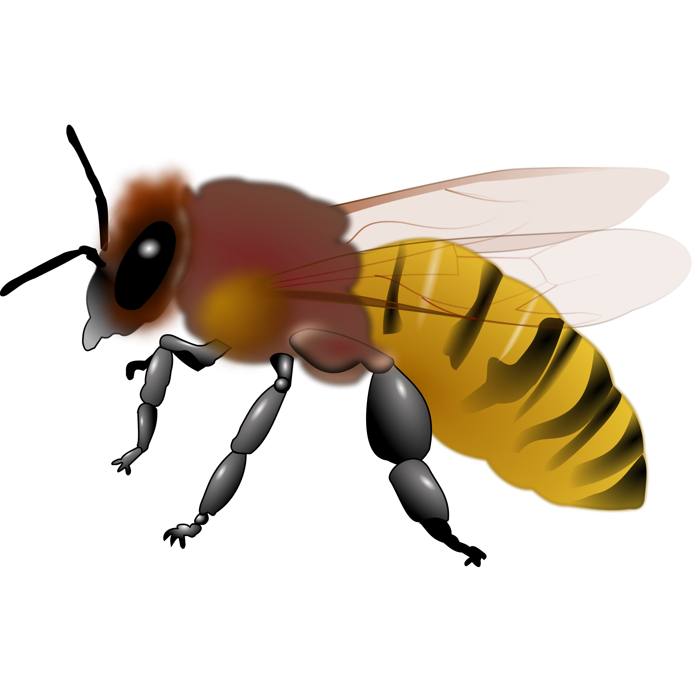 Halloween bumblee clipart clipart royalty free library Bee Clipart : Honeybee | 3D Bee | Pinterest | Clip art free clipart royalty free library