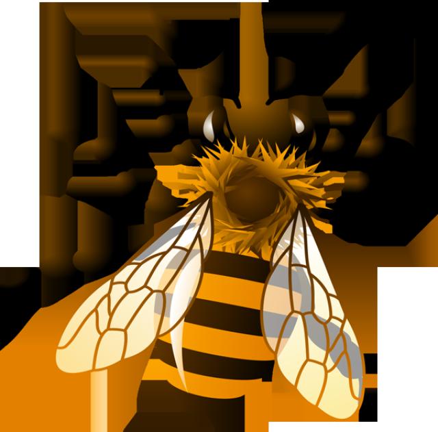 Bee crown clipart transparent Honey Bee Clipart - Clipart Kid | Bees | Pinterest | Bee clipart and ... transparent