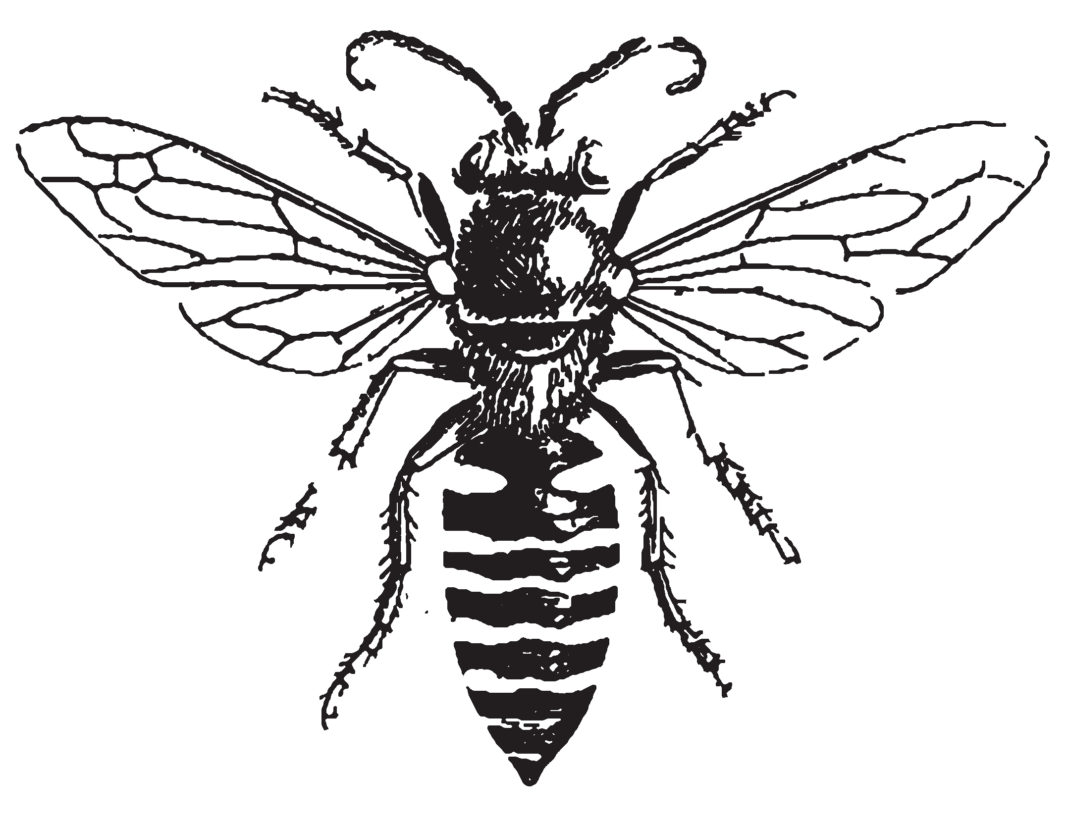 Bee drawings clipart picture transparent download Free Honey Bee Drawing, Download Free Clip Art, Free Clip Art on ... picture transparent download