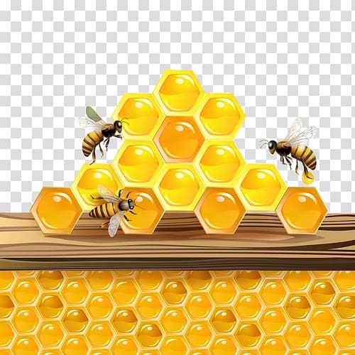Bee honeycomb clipart picture library Western honey bee Honeycomb Insect, bee transparent background PNG ... picture library