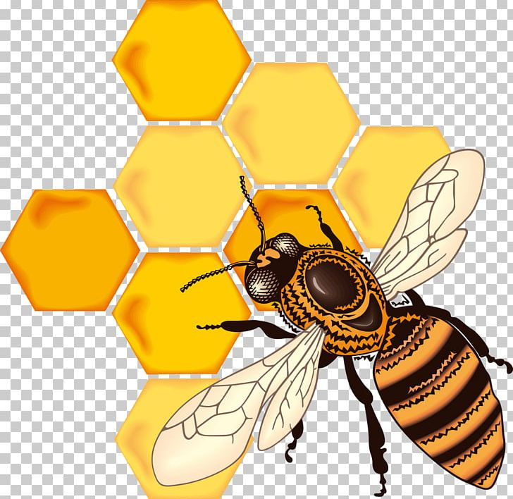 Bee honeycomb clipart png Honey Bee Honeycomb Drawing PNG, Clipart, Arthropod, Bee, Bumblebee ... png