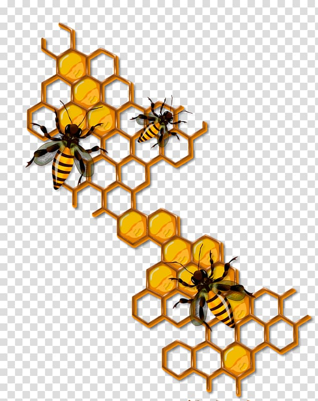 Bee honeycomb clipart graphic transparent stock Bee Honeycomb Insect , bee transparent background PNG clipart ... graphic transparent stock