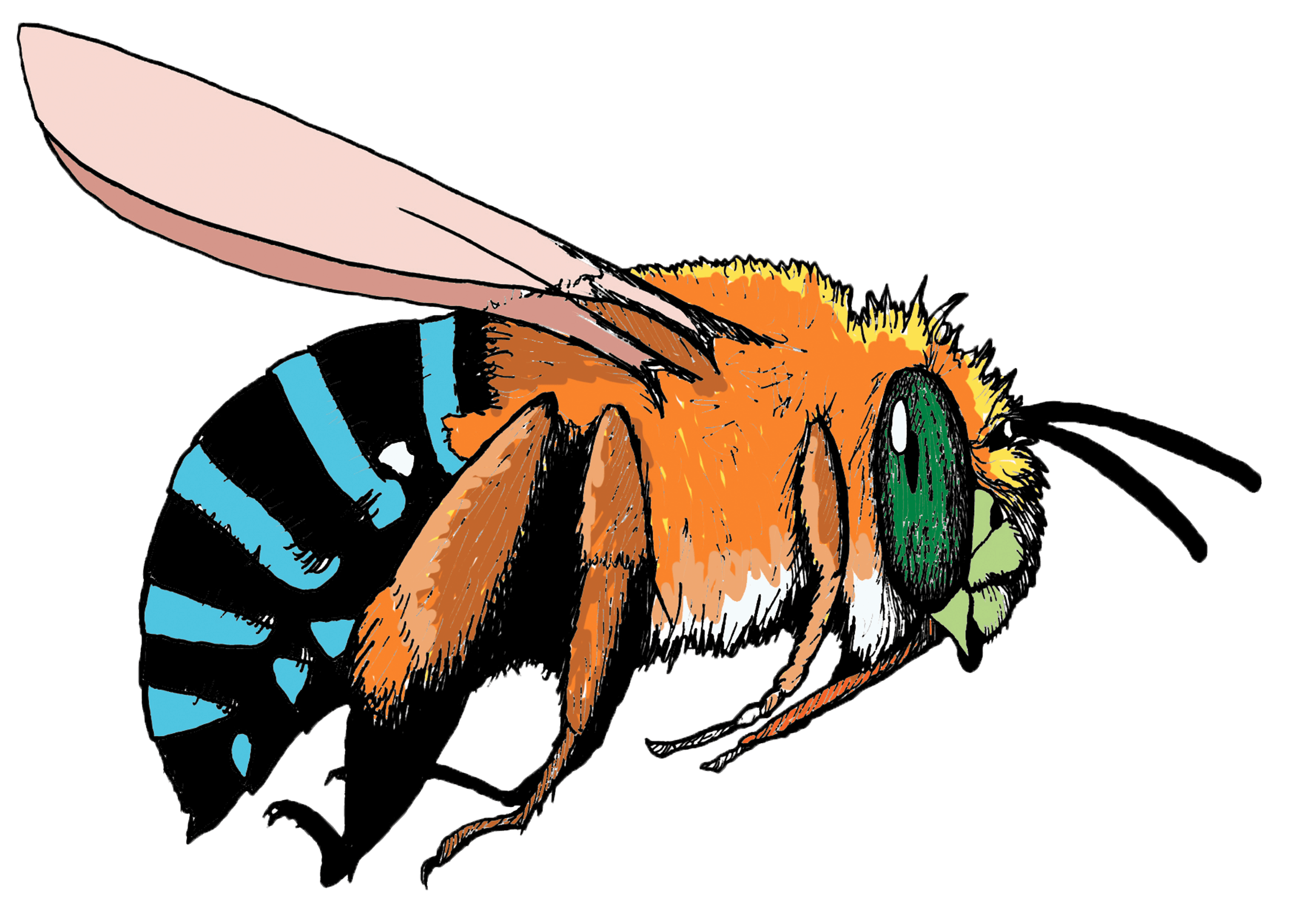 Bee pollinating flower clipart clipart free download Pollinator Link | Bringing birds, butterflies and bees to backyards ... clipart free download