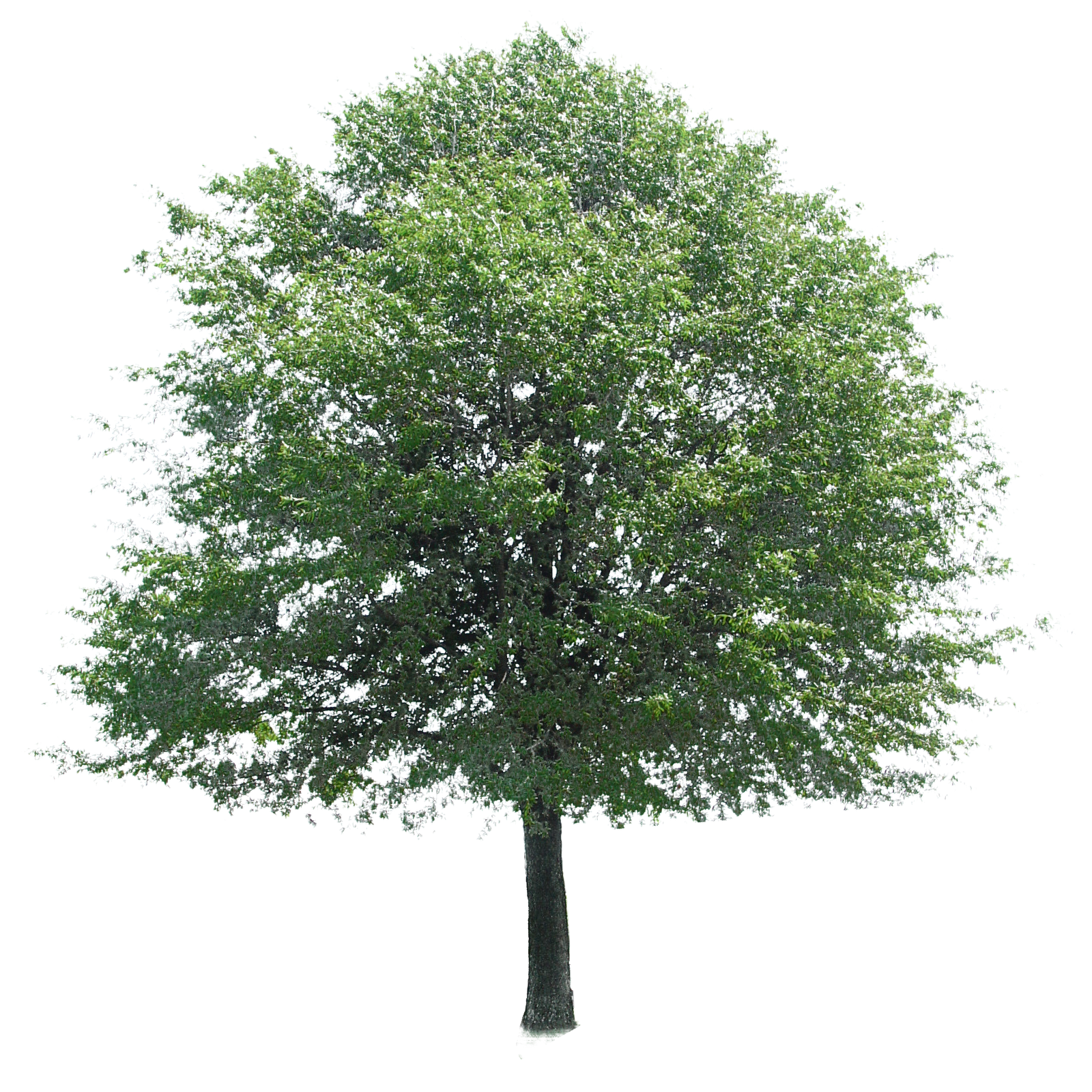 Shade tree clipart clipart freeuse Image Of Tree #5052 - 1280×720 | Tanvadance clipart freeuse