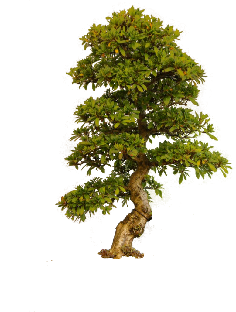 Bonsai tree clipart clip library download tree png by camelfobia on DeviantArt | staffage_GREEN | Pinterest clip library download