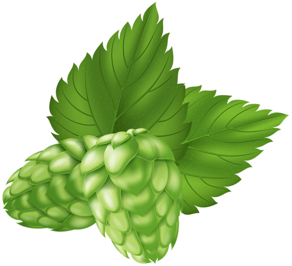 Beer hops clipart picture royalty free download Beer Hops Plant PNG Clip Art Image | Gallery Yopriceville - High ... picture royalty free download