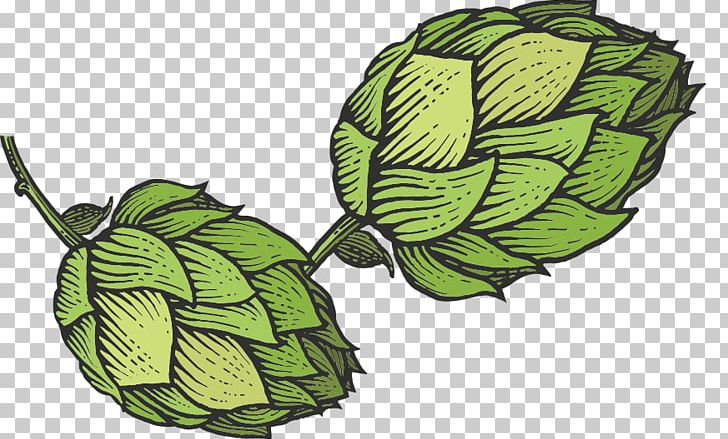 Beer hops clipart svg stock Beer Hops Common Hop Sketch PNG, Clipart, Beer, Beer Hops, Cider ... svg stock