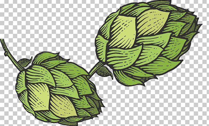 Hops beer clipart vector library download Beer Hops Common Hop Sketch PNG, Clipart, Beer, Beer Hops, Cider ... vector library download
