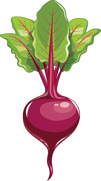 Beet clipart pictures svg transparent download Beet clipart 5 » Clipart Station svg transparent download