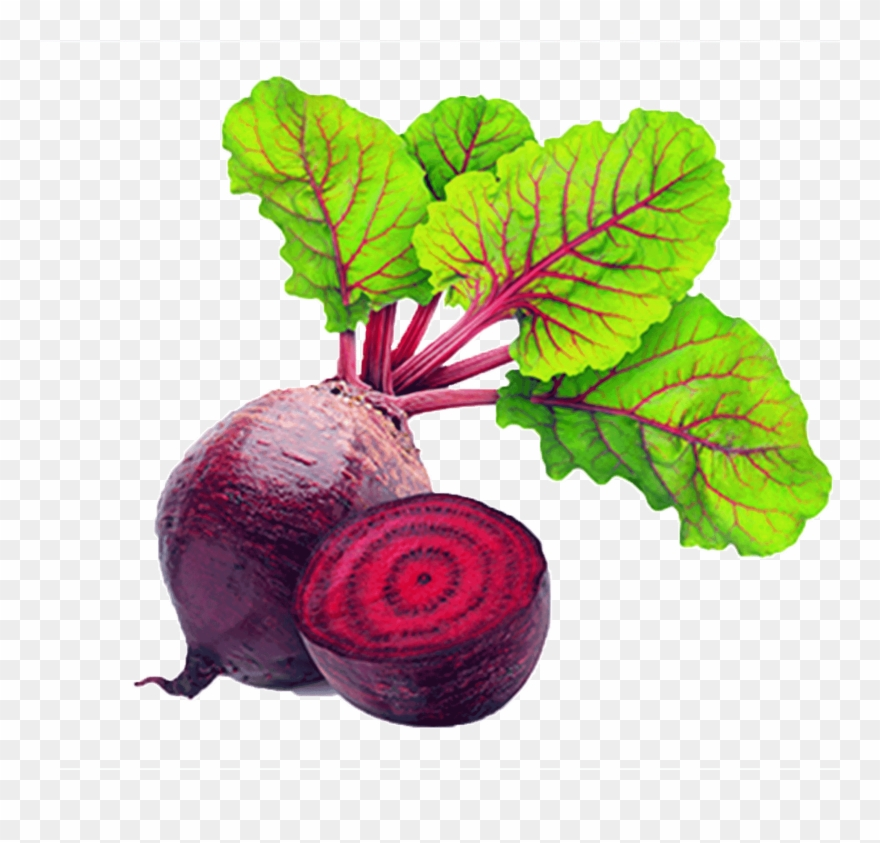 Beet clipart pictures clip black and white stock Red Beet Root Physical Material - Beets Vegetable Clipart (#3589595 ... clip black and white stock