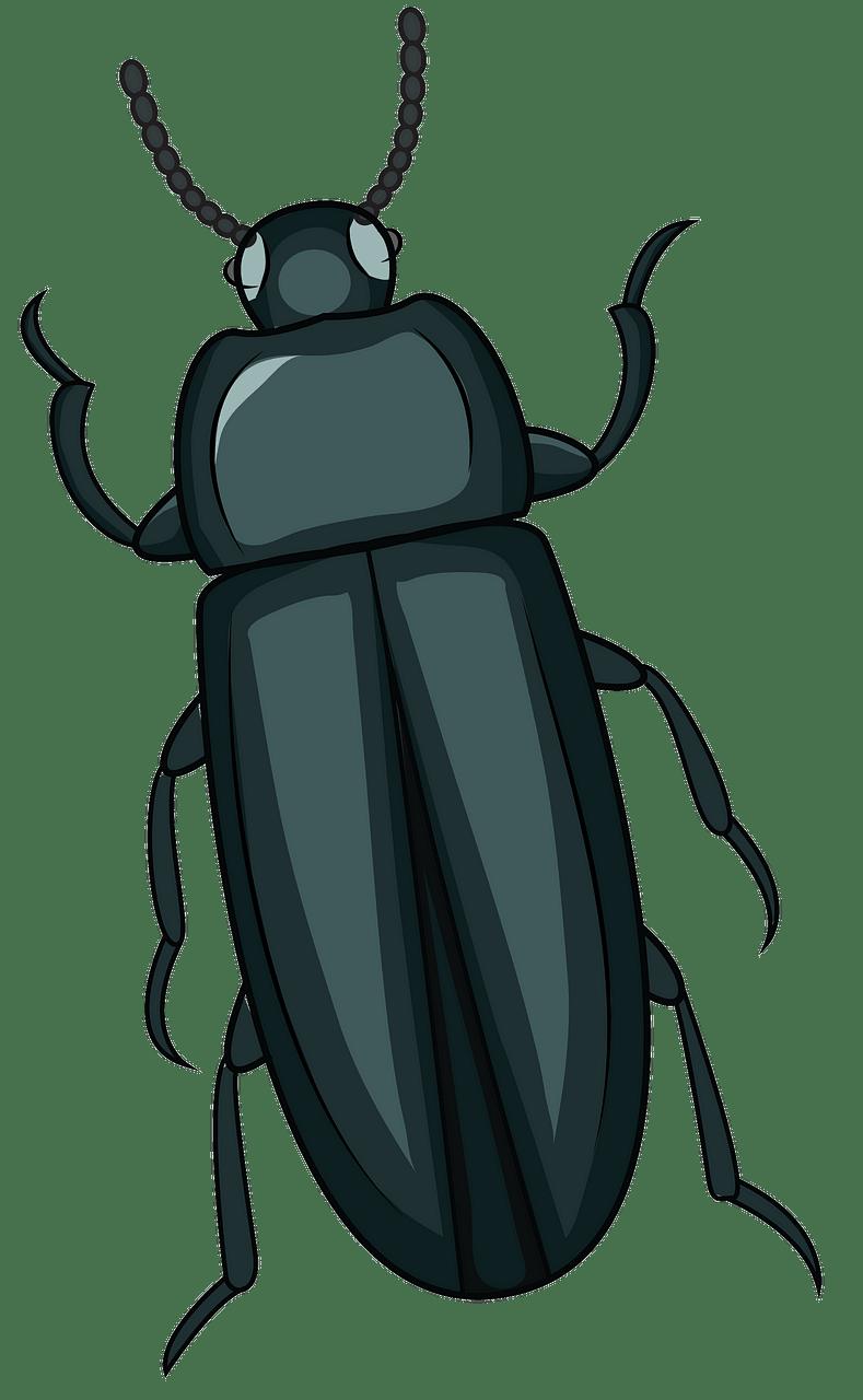 Beetle print clipart clip art royalty free download Mealworm Beetle clipart. Free download. | Creazilla clip art royalty free download