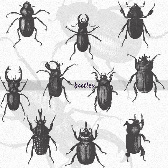 Beetle print clipart picture royalty free Beetles Clipart Halloween Clipart Bugs Print Illustration Digital ... picture royalty free