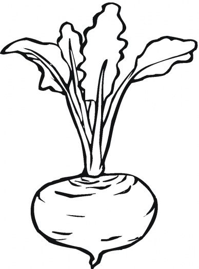 Beetroot clipart black and white graphic library stock Beetroot 7 coloring page | Super Coloring | food, vegetables, fruits ... graphic library stock