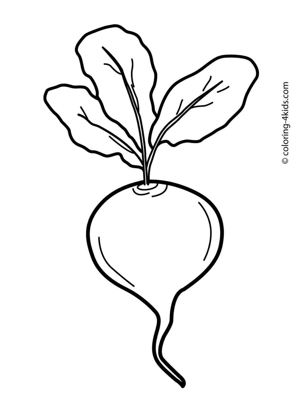 Beetroot clipart black and white png library Beet Drawing | Free download best Beet Drawing on ClipArtMag.com png library