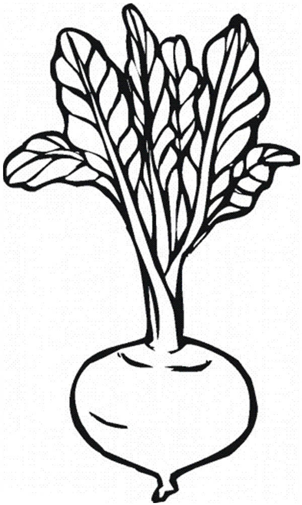 Beetroot clipart black and white svg royalty free Free Beet Clipart Black And White, Download Free Clip Art, Free Clip ... svg royalty free