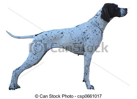 Belgian shorthaired pointer clipart picture free download German short haired pointer Stock Photo Images. 175 German short ... picture free download