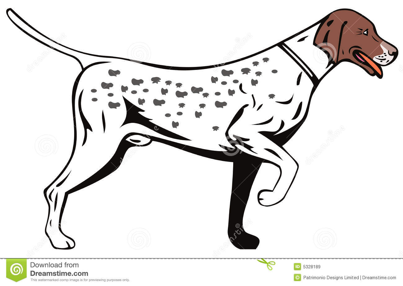 Belgian shorthaired pointer clipart png free library Shorthaired Stock Illustrations – 139 Shorthaired Stock ... png free library