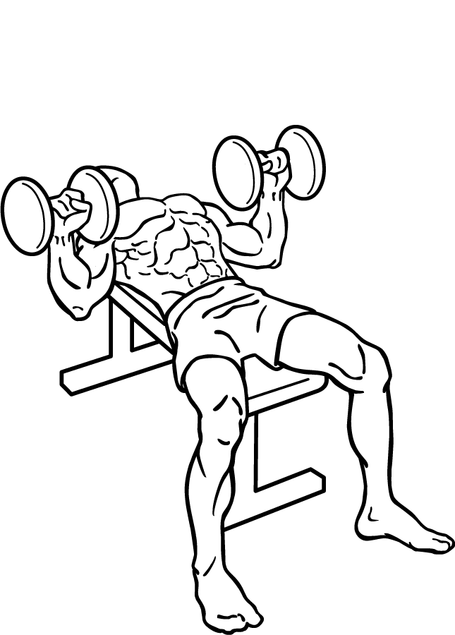 Bench press exercise clipart picture black and white Dumbbell Bench Press - Add this Bench Press Exercise to your next ... picture black and white
