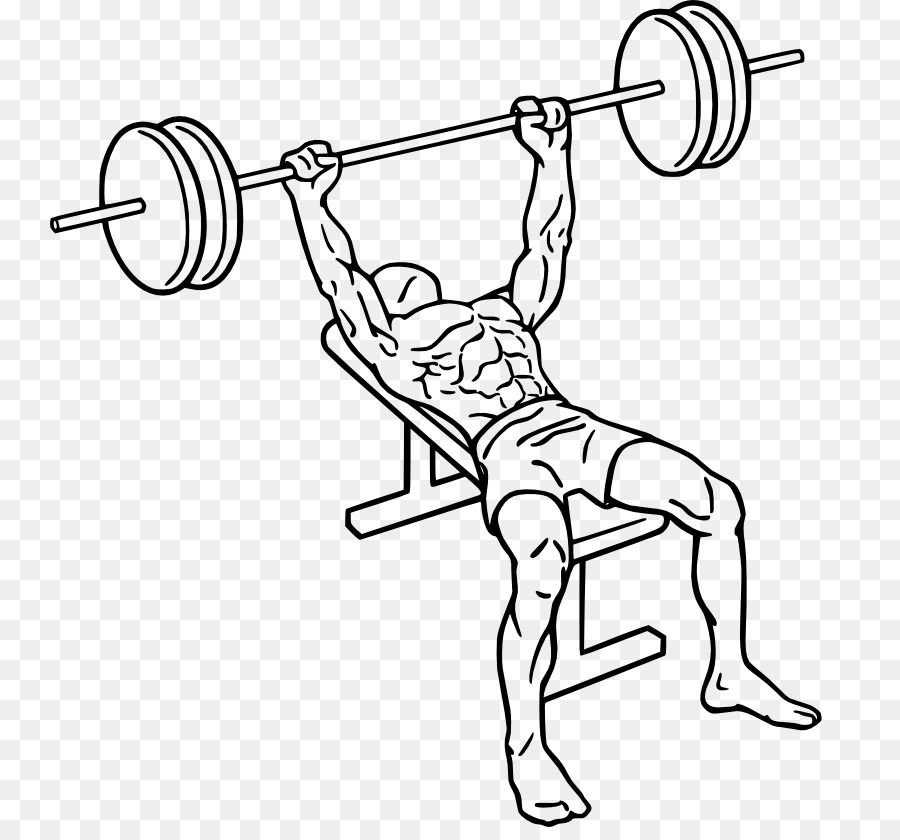 Bench press exercise clipart banner freeuse Fitness Cartoon clipart - Exercise, Barbell, Line, transparent clip art banner freeuse