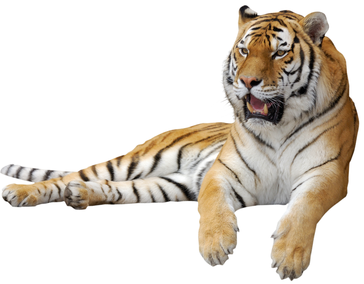 Free clipart tiger reading book picture library Tiger PNG Clipart Picture | Tigers | Pinterest | Tigers picture library