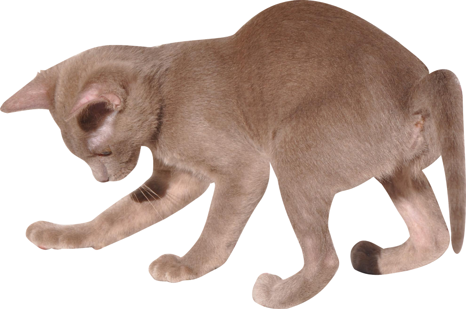 Primitive cat clipart clip library download Free Cat Images: Free digital kitten png with transparent background ... clip library download