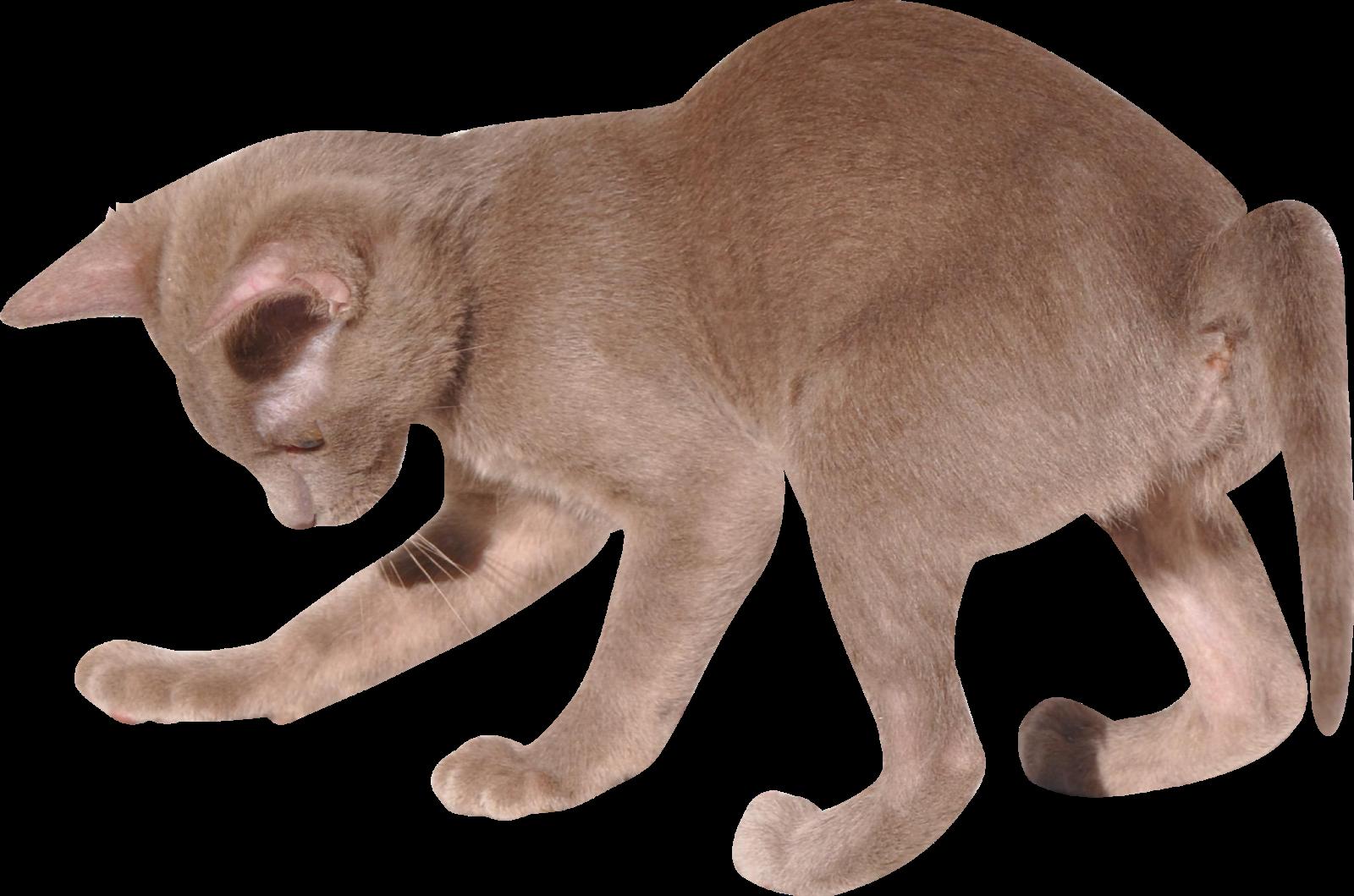 Dry cat food bag clipart. Free images digital kitten
