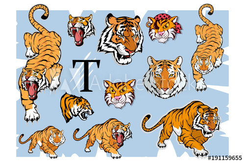 Bengal mascot clipart graphic library download Tiger set, isolated on white background, colour illustration ... graphic library download