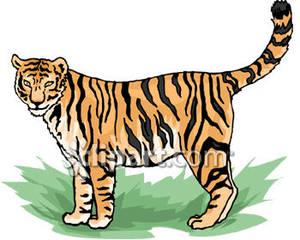 Bengal tiger clipart png freeuse stock Bengal Tiger - Royalty Free Clipart Picture png freeuse stock