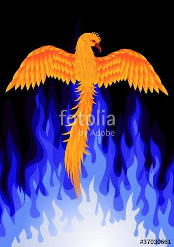 Berd on fire clipart banner stock Phoenix berd tattoo\
