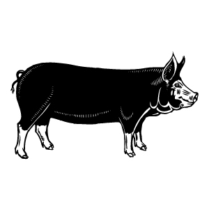 Berkshire pig clipart vector free library Free Drawn Pig berkshire pig, Download Free Clip Art on Owips.com vector free library