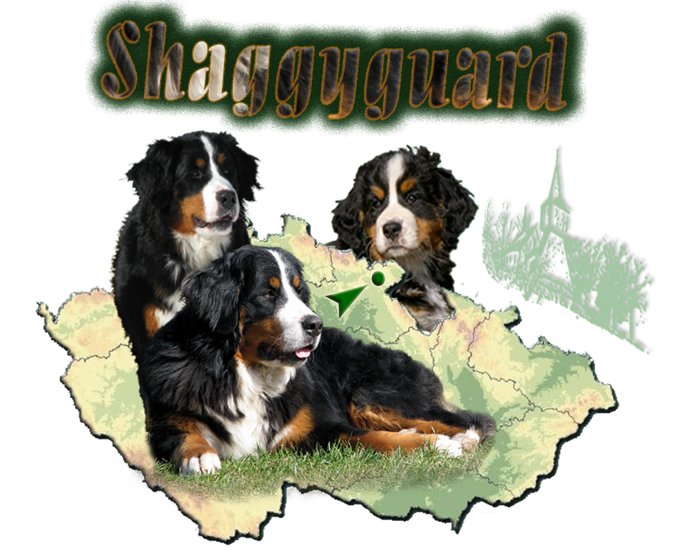 Bernese mountain dog clipart vector library Bernese Mountain Dog - Pictures, posters, news and videos on your ... vector library