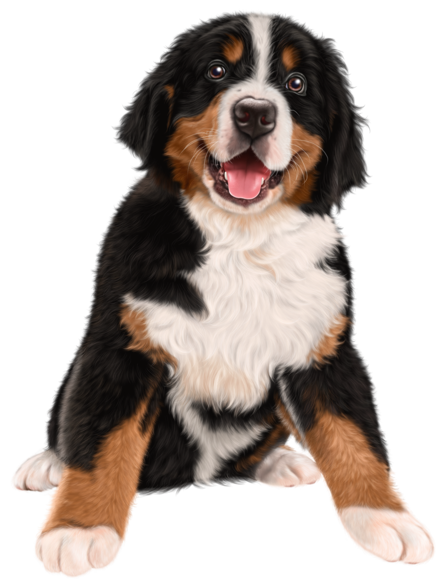 Bernese mountain dog clipart clip freeuse library Dog Transparent Clip Art Image | Gallery Yopriceville - High ... clip freeuse library