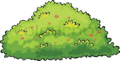 Berries on a bush clipart graphic free library berry bush drawing - Ixquick Picture Search | Gooseberry Garden ... graphic free library