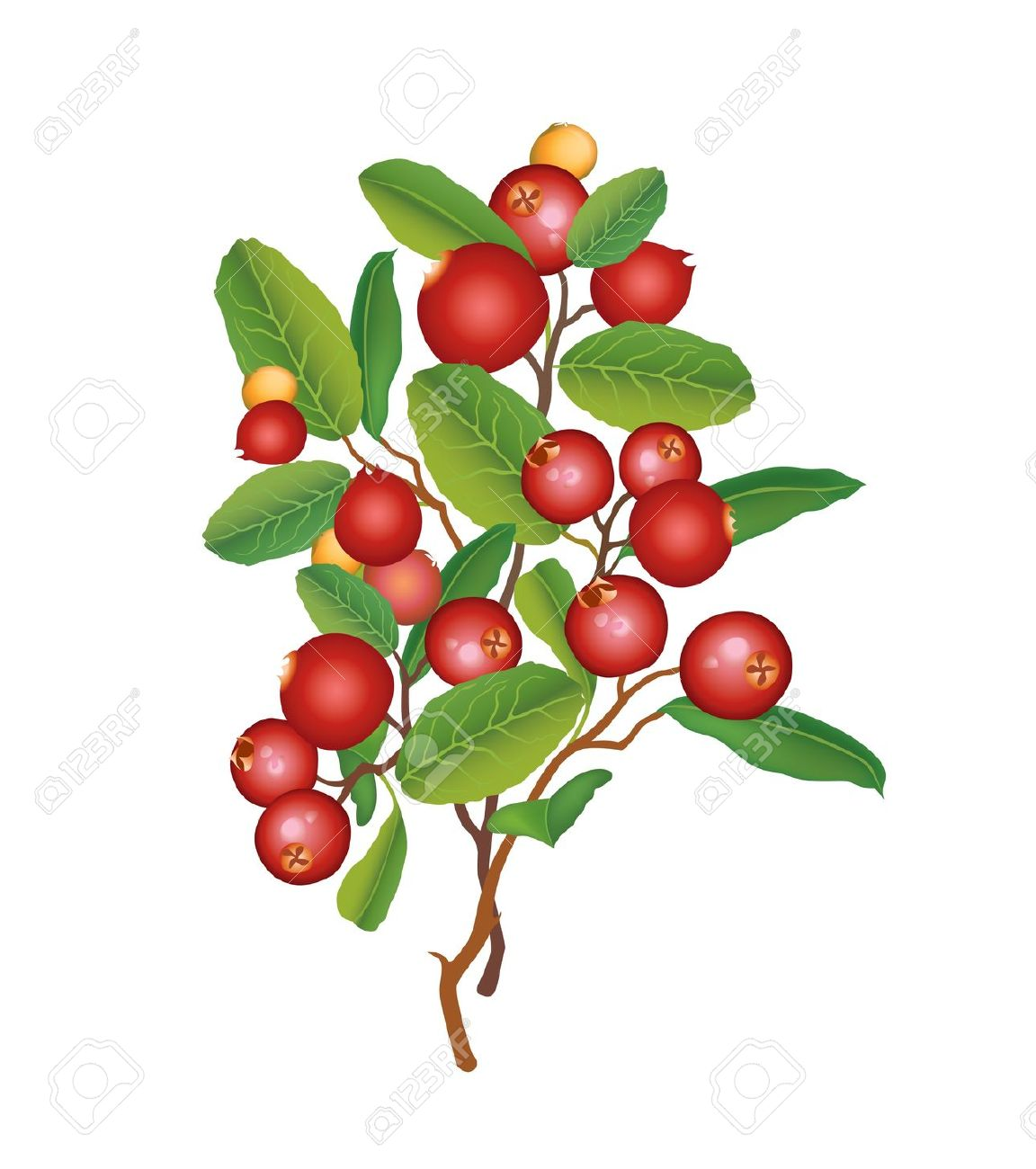 Berries on a bush clipart banner transparent download Berry bush clipart 7 » Clipart Station banner transparent download