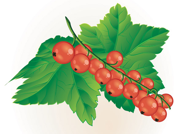 Berries on a bush clipart png transparent Free Flower Berries Cliparts, Download Free Clip Art, Free Clip Art ... png transparent