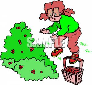 Berry picking clipart picture royalty free Pigtails Picking Berries From | Clipart Panda - Free Clipart Images picture royalty free