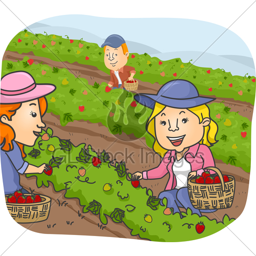 Berry picking clipart image library download People Picking Strawberry Farm · GL Stock Images image library download