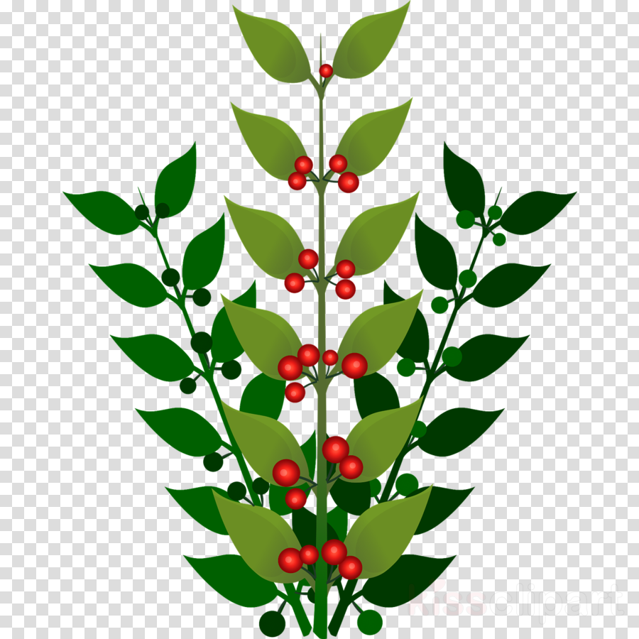 Berry plant clipart clip art black and white library Holly Leaf clipart - Blueberry, Leaf, Plant, transparent clip art clip art black and white library