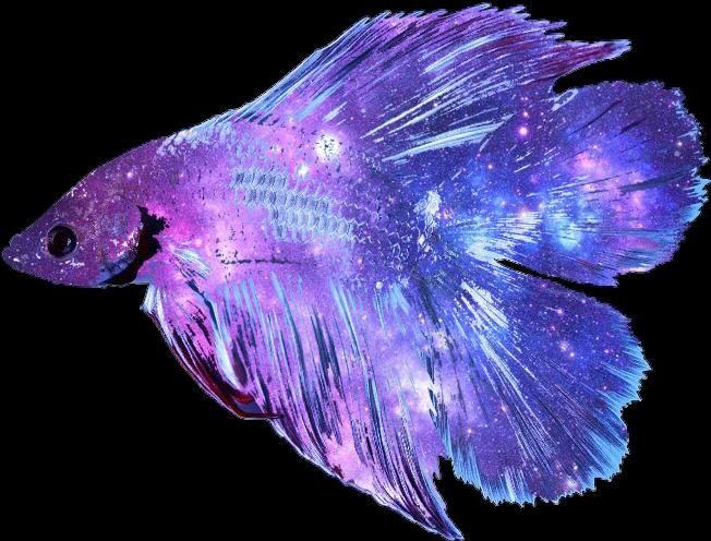 Betta fish clipart clip black and white download galaxy nebula space betta bettafish bettasplendens fish... clip black and white download