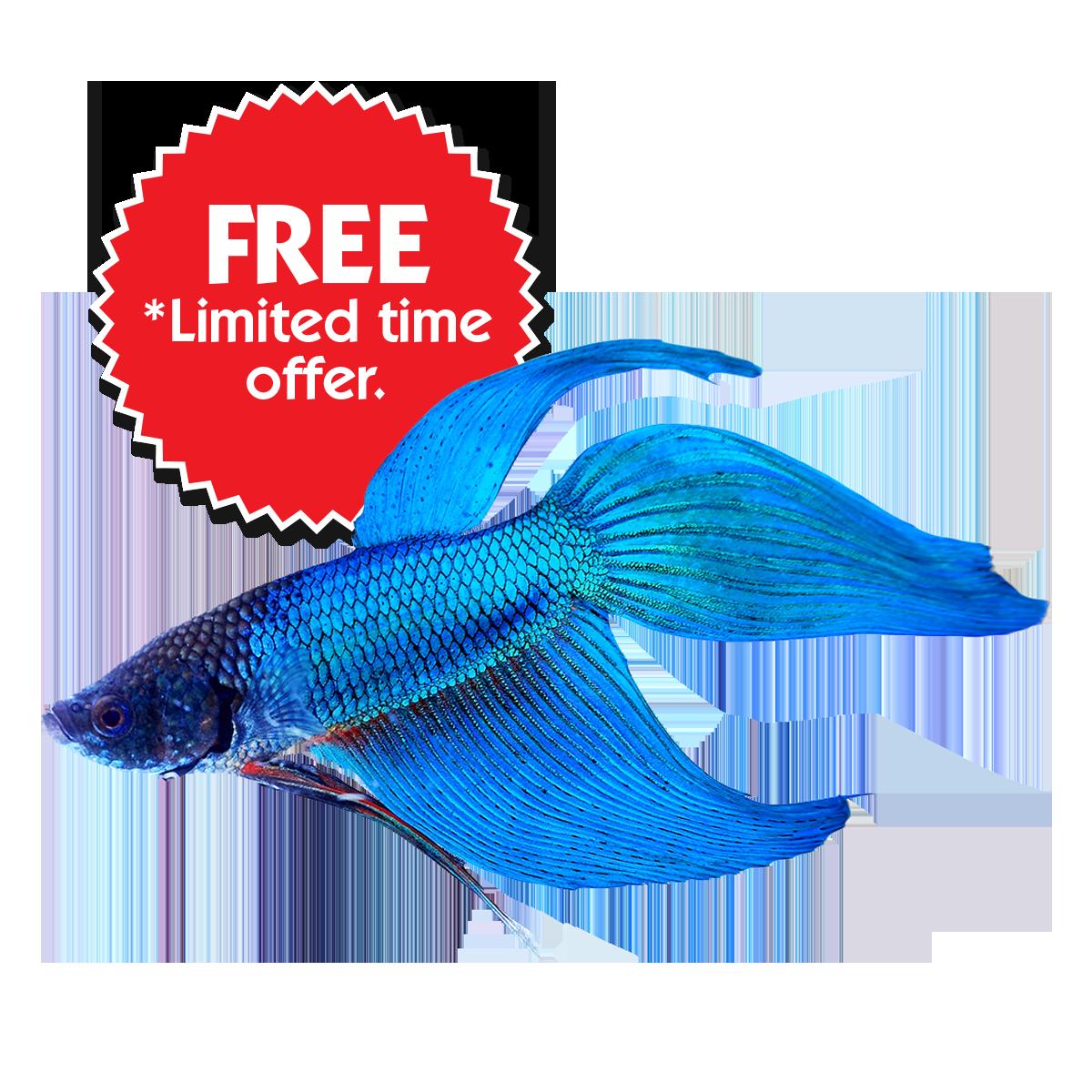 Betta fish clipart royalty free stock Buy Betta Fish Online & Save On Fish Bowl Kits | Home | GoBetta royalty free stock