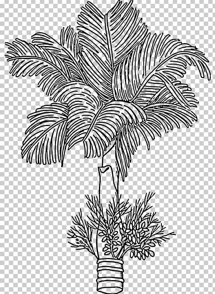 Betel nut clipart banner transparent stock Areca Palm Areca Nut Betel Arecaceae Paan PNG, Clipart, Arecaceae ... banner transparent stock