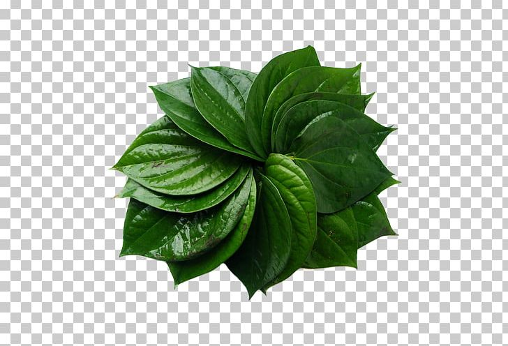 Betel nut clipart graphic library download Paan Betel Areca Palm Areca Nut Black Pepper PNG, Clipart, Areca Nut ... graphic library download